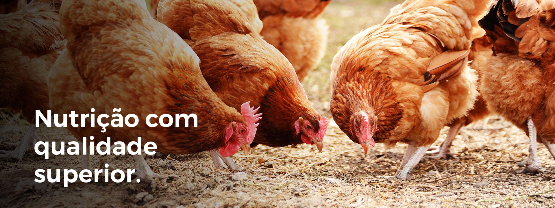 Nutrição aves