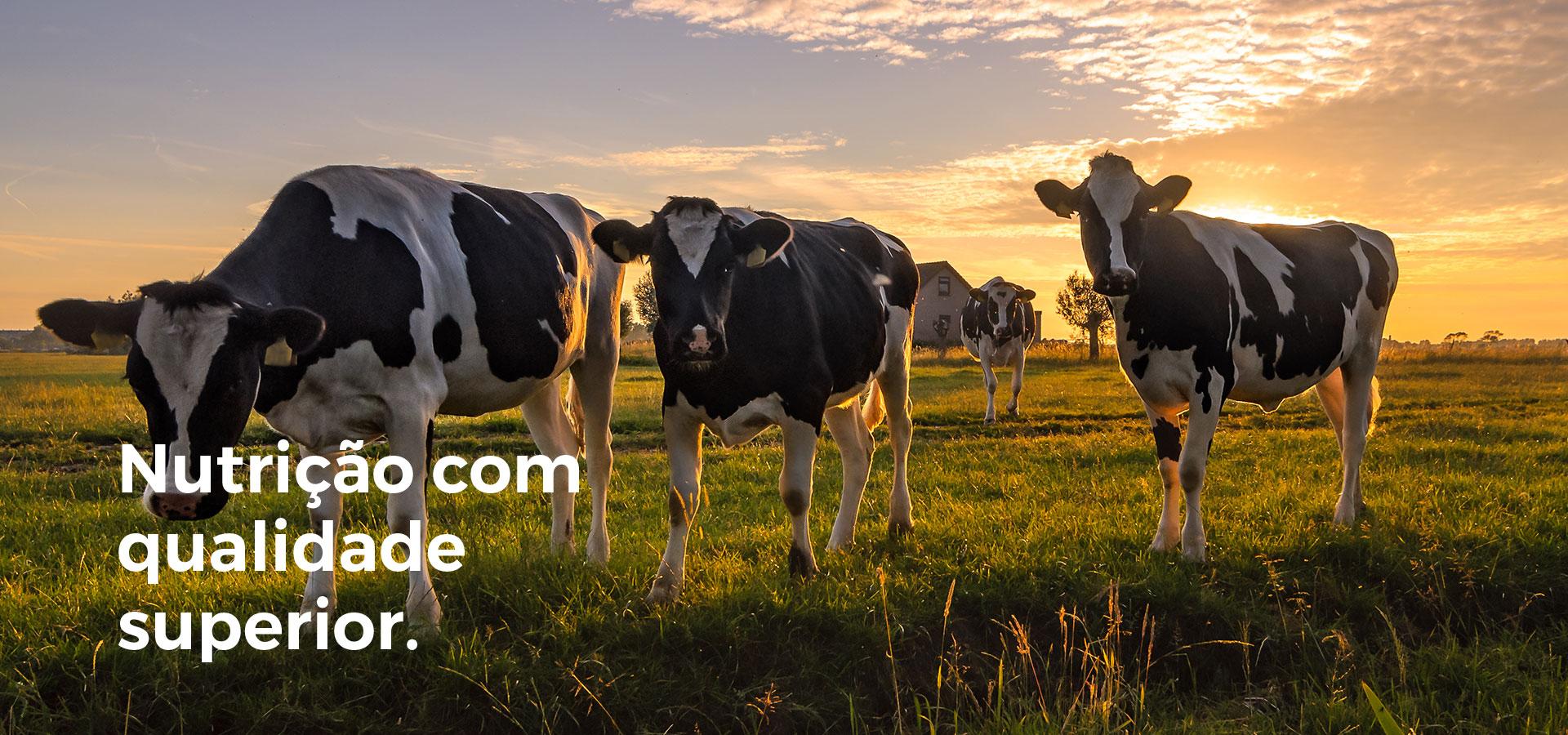 Nutrições bovinos
