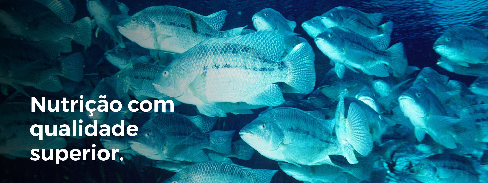 Nutrição para peixes
