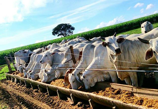 Nutrição animal: essencial para a saúde!