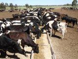 Nutrição animal: custo ou investimento para sua criação?