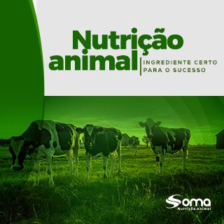Nutrição animal: o ingrediente certo para o sucesso