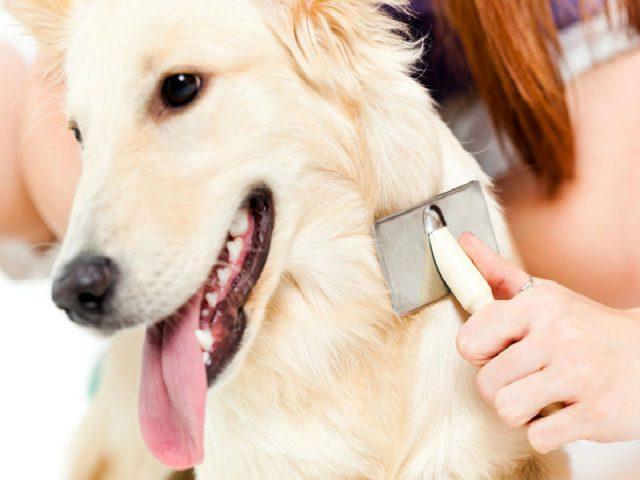 Quatro dicas para evitar a queda de pelos em cães