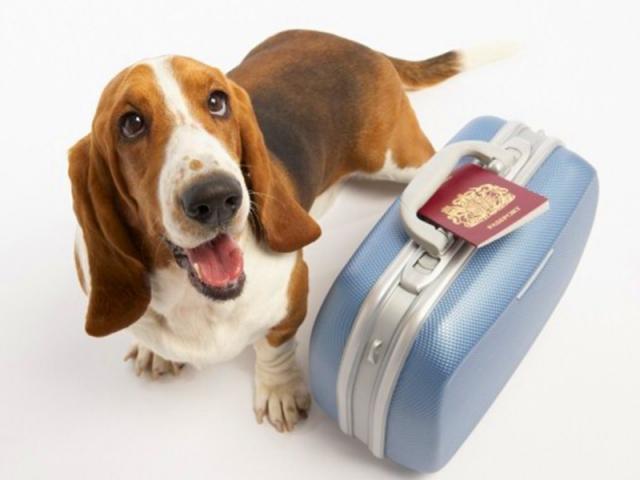 Vai viajar? Saiba como agir para garantir a saúde e bem-estar do seu cão.