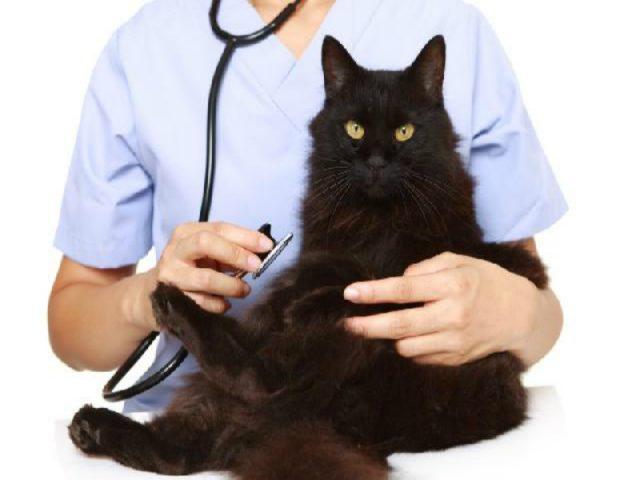 Castração prolonga a vida do seu gato