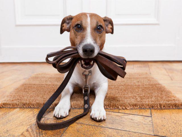 6 bons motivos para levar seu cão para passear na rua