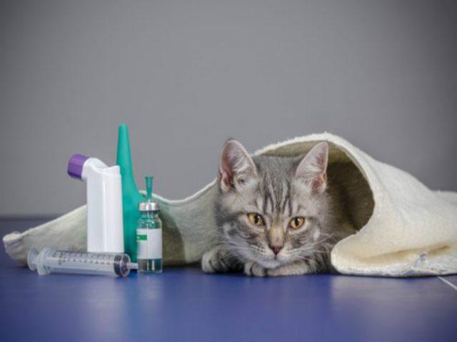 Vermífugos para gatos: a importância da prevenção na saúde do animal